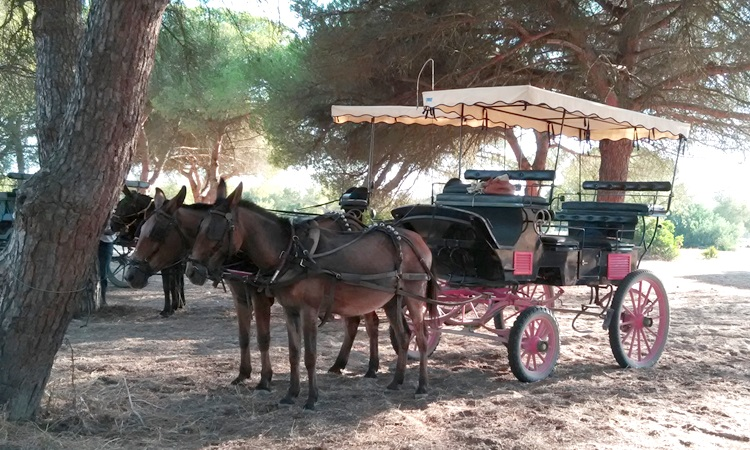 Paseo a caballo. Incentivos en Andalucía y Murcia.