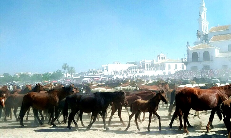 Caballos y El Rocío. Incentivos en Andalucía y Murcia.